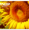 Sunflower card design